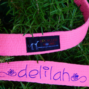 Hot Pink Karate Belt Leash